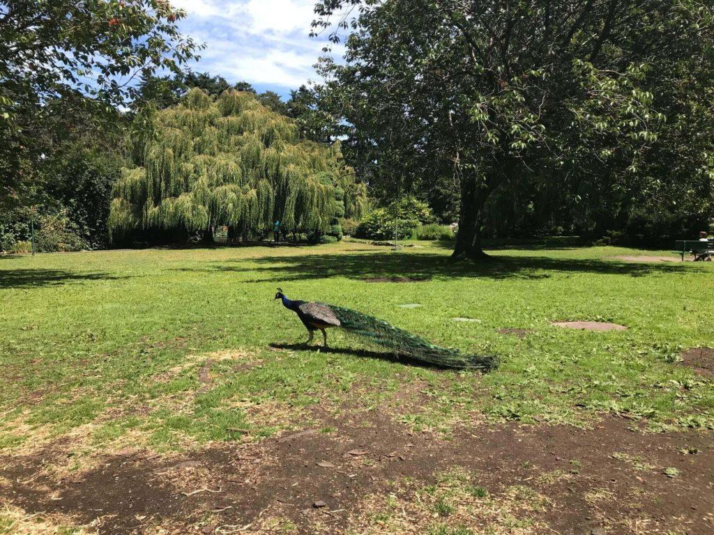 Beacon Hill 公園